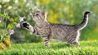 Какие звуки издают животные.  Обучающие и развивающие видео