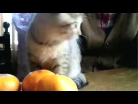2011年11月23日、我が家に子猫のベベがやって来ました♪ 初めての環境に不安なのか、キョロキョロ・・・キョロキョロ プクプクして、丸顔の、愛らしい子猫ちゃん「ベベ」です。