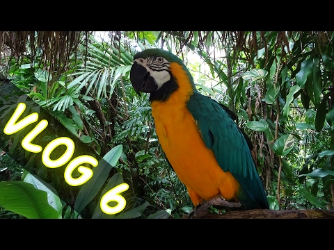PARROT JUNGLE ISLAND MIAMI ! VLOG 6