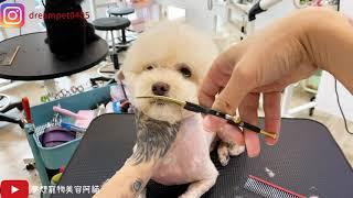 夢-職人刀具 小彎剪使用示範 dog grooming   夢想寵物美容110