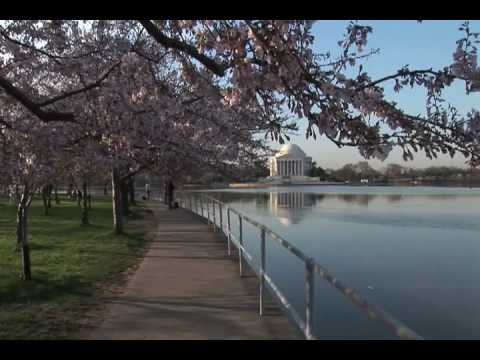 President Thomas Jefferson Memorial Building and Cherry Blossom Trees Washington DC United States