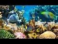 4к подводный мир