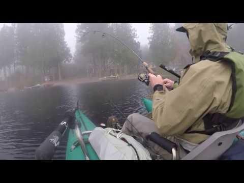 Beaver Lake Broodstock Rainbow Trout October 2017