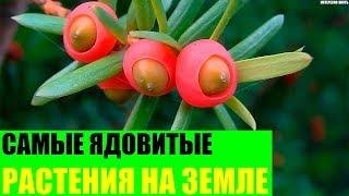 Самые ядовитые растения на Земле