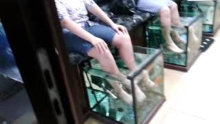 Адлер   Краснодарский край, рыбки щекочут ноги(Адлер Краснодарский край, рыбки щекочут ноги Видео по теме Адлера Краснодарского края: адлер 2015, адлер..., 2015-07-09T14:41:05.000Z)