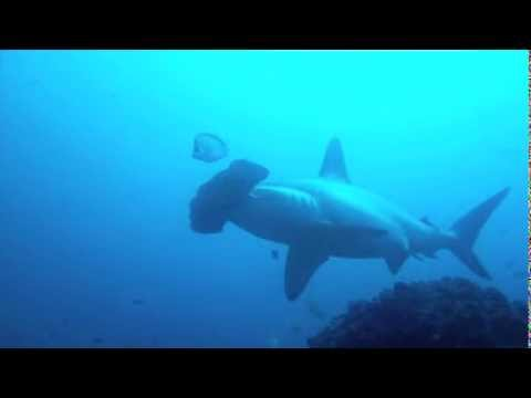 Cocos Island Trip Highlights - January 15-25 2012