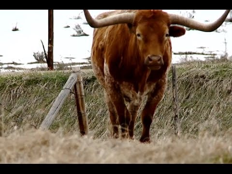Colorado Rancher Documentary [FULL]