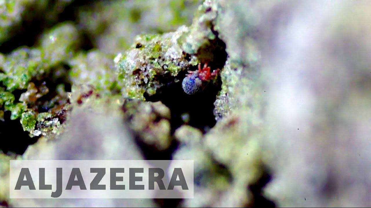 Scientists examine impact of climate change on Antarctica marine life