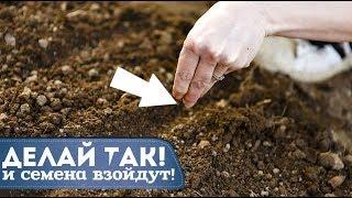 Советы и секреты посева семян овощей и зелени под зиму! Как и когда сеять семена под зиму?