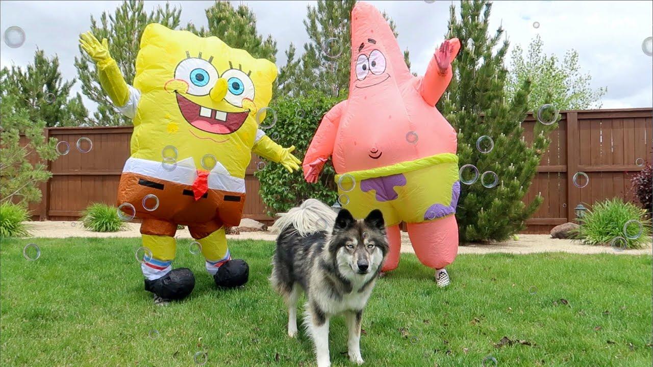 Real Life SpongeBob & Patrick Surprise Kakoa!
