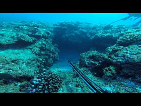 Skin Diver Maui