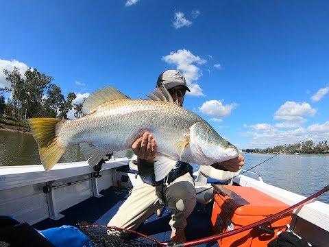 Fitzoy River Barramundi & Threadfin Salmon (part 2).