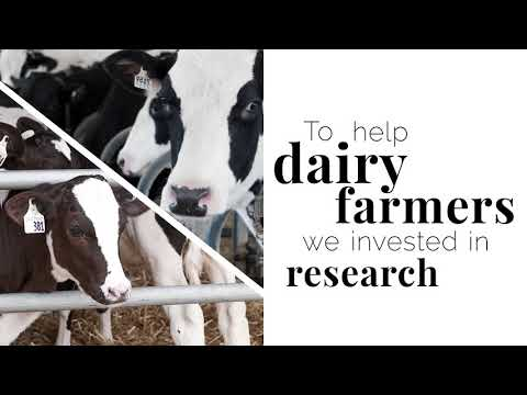Investing in Agriculture: Dairy Cow Comfort
