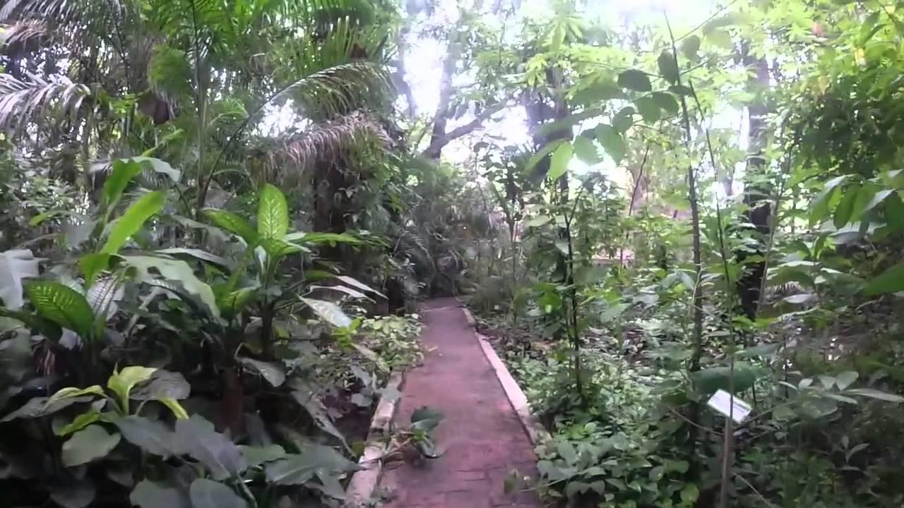 Jard n bot nico faustino miranda parte 3 youtube for Jardin botanico unam 2015