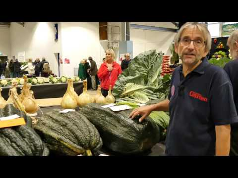 Harrogate Autumn Flower Show 2016 Giant vegetable competition