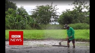 Thailand cave: Flooded farmers support rescue effort - BBC News