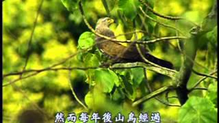 台灣世紀之旅-第001集 灰面鷲