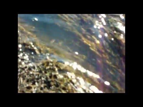 Журчат ручьи слепят лучи и тает лед и сердце тает ноты фото 169-358