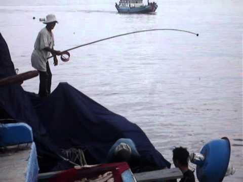 câu chạy hay câu dắt câu cá ngừ
