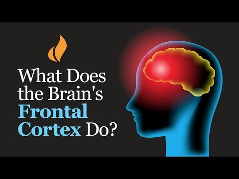 What Does The Brain's Frontal Cortex Do? (Professor Robert Sapolsky Explains)
