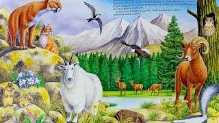 Учим горных животных. Развивающая игра. Детям о животных. Zoo Moo