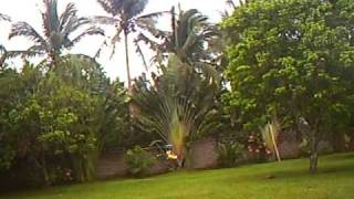RC Helicopter CopterX 450 @ Nagcarlan Laguna Philippines flown by SCAT