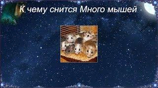 К чему снится Много мышей (Сонник)