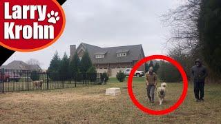 Dog aggressive Anatolian Shepherd / changing the aggression mindset