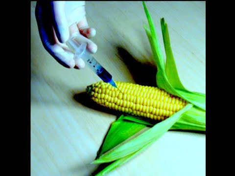 New GMO Crops Eat Your Guts from the Inside, Almost Everythi
