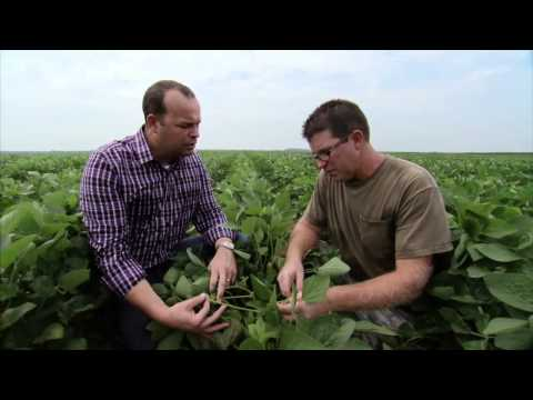 Illinois Soybean Farm - America's Heartland