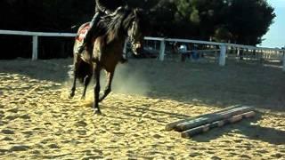 cheval coco