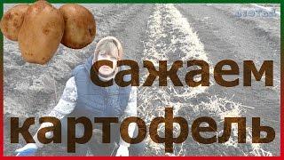Сажаем картофель под солому картофель посадка как правильно посадить картофель(сажаем картофель под солому как посадить картофель картофель посадка как правильно посадить картофель...., 2016-03-27T17:24:25.000Z)