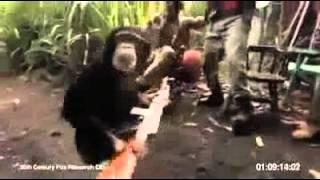 Affe mit maschinengewehr