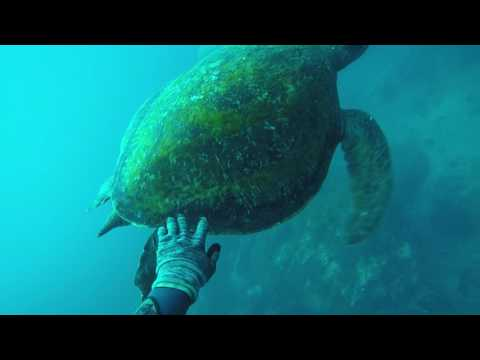 Spearfishing Norfolk Island, 2017