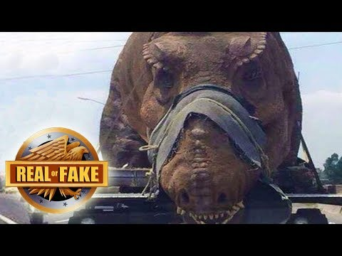 Thumbnail: LIVING DINOSAUR CAPTURED IN AFRICA - real or fake?