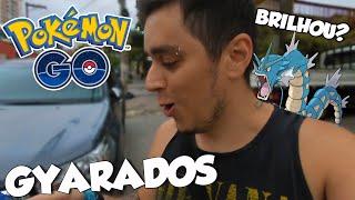 ENCONTRAMOS 2 GYARADOS SELVAGENS! BRILHOU? - Pokémon Go  | Capturando Shiny (Parte 145)