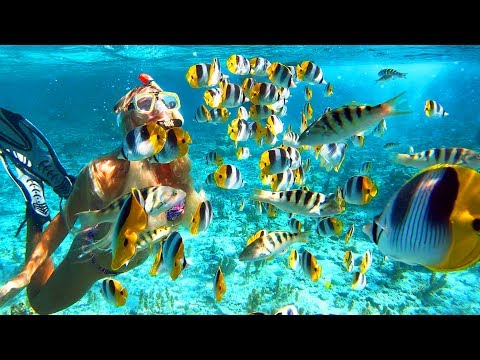 SNORKELING IN BORA BORA (Best in the World)