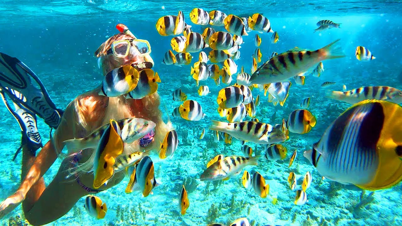 SNORKELING IN BORA BORA (Best in the World) - YouTube
