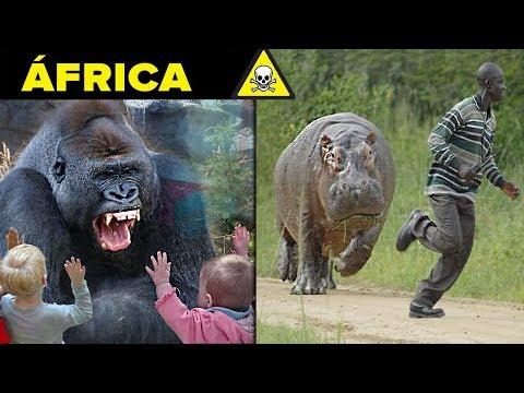 10 PIORES CRIATURAS DA AFRICA !!