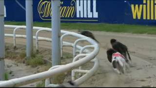 Round 3 heats of the 2016 William Hill Greyhound Derby
