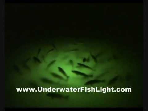 massive school of redfish on green underwater dock lights houston, Reel Combo