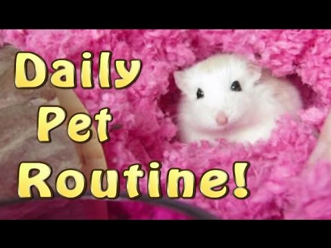 MY DAILY PET CARE ROUTINE!!