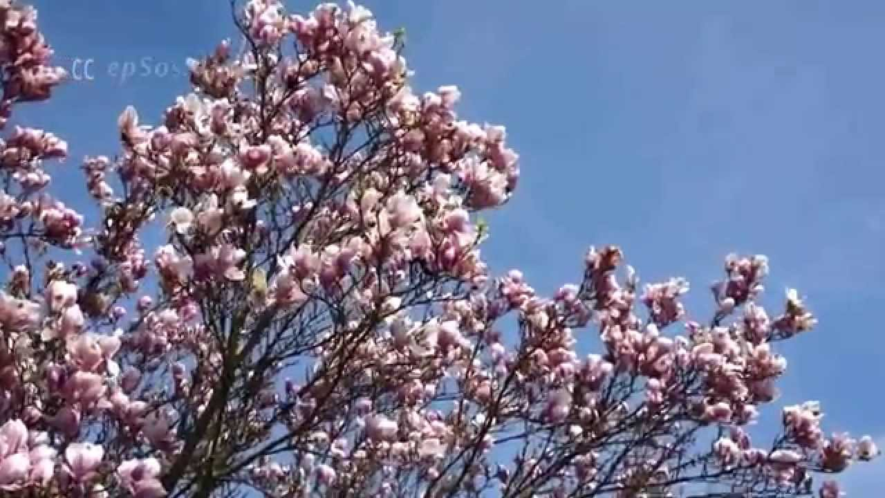 cute spring flowers blossom in europe youtube