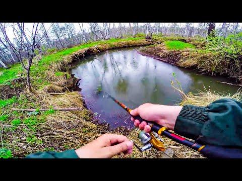 Ловля щуки на малых реках весной | Весенняя рыбалка на живописной лесной речке