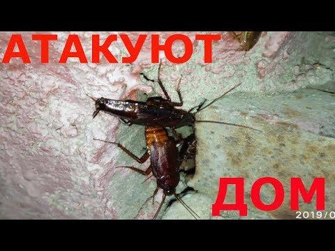 ЧЁРНЫЕ ТАРАКАНЫ АТАКУЮТ ДОМ - 2. Армия тараканов размножается!
