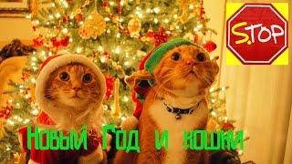 Коты и Новый год, Топ животные
