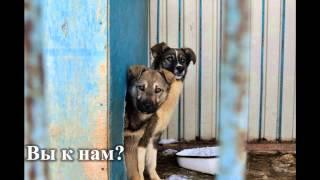"""ТООО """"Общество защиты животных"""""""