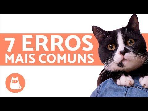 Cuidar De Gatos - 7 Coisas Que As Pessoas Fazem Errado