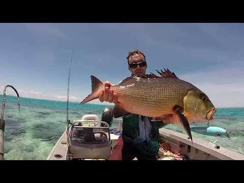 CRAZY CAPE YORK FISHING GT, CORAL TROUT, RED BASS