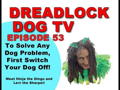Episode 53   To Solve Any Dog Problem, First Switch Your Dog Off!